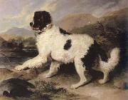 lion a newfoundland dog Sir Edwin Landseer