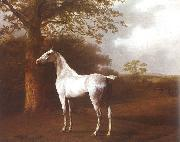 White Horse in Pasture Jacques-Laurent Agasse