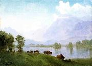 Buffalo Country Bierstadt