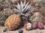 A Pineapple,a Peach and Plums on a mossy Bank (mk37) John Sherrin