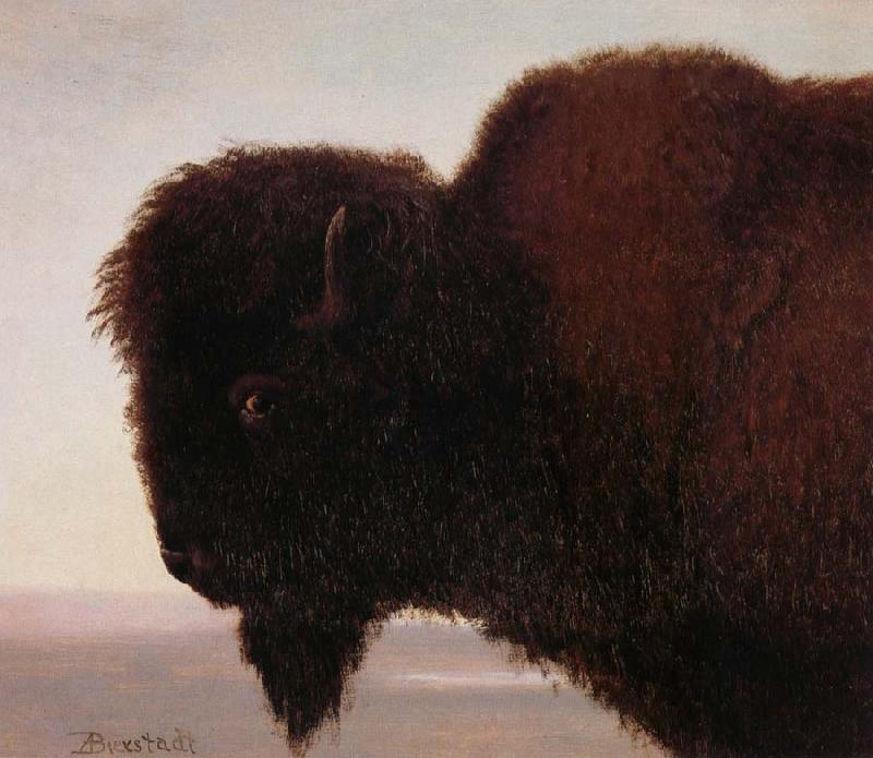 Albert Bierstadt Buffalo Head