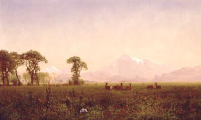 Albert Bierstadt Elk Grazing in the Wind River Country