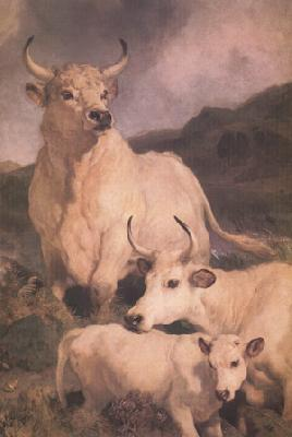 Sir Edwin Landseer Wild Cattle at Chillingham (nn03)